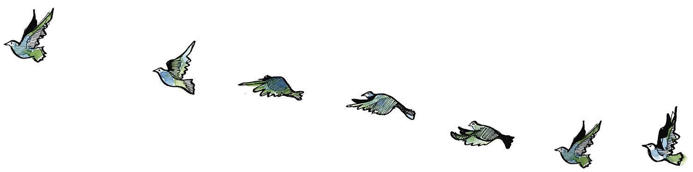 Beflügeln Sie Ihr Leben und heben Sie ab wie ein Vogel!